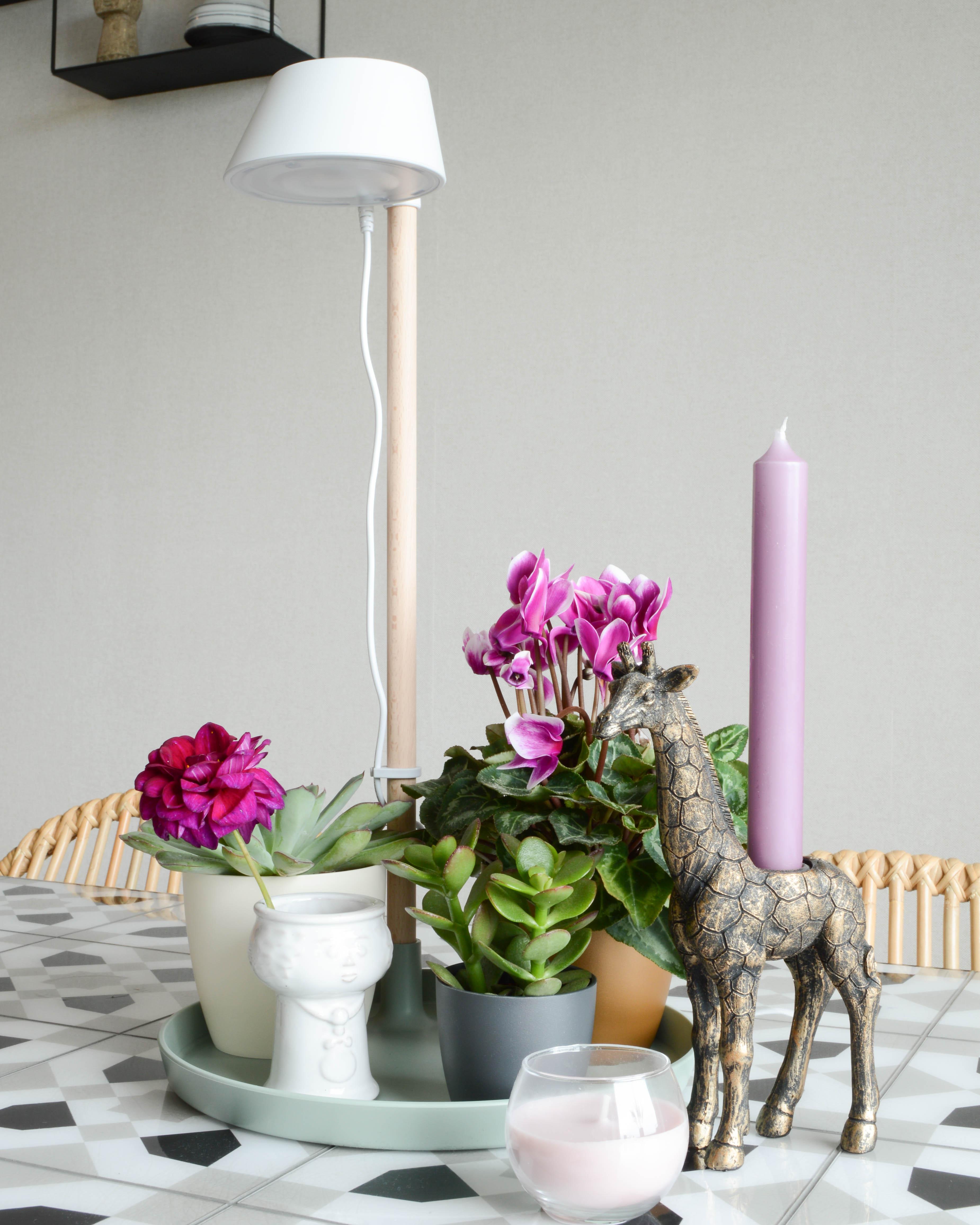 lamp voor planten